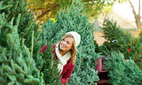 Новогоднее дерево каждому кингисеппцу